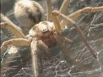 insects-spiders-bugs
